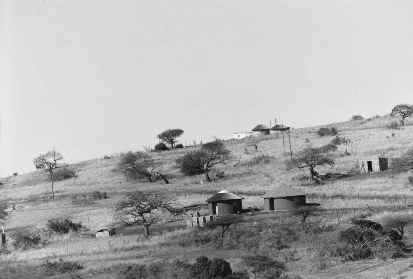 Zululand / Africa (2006).